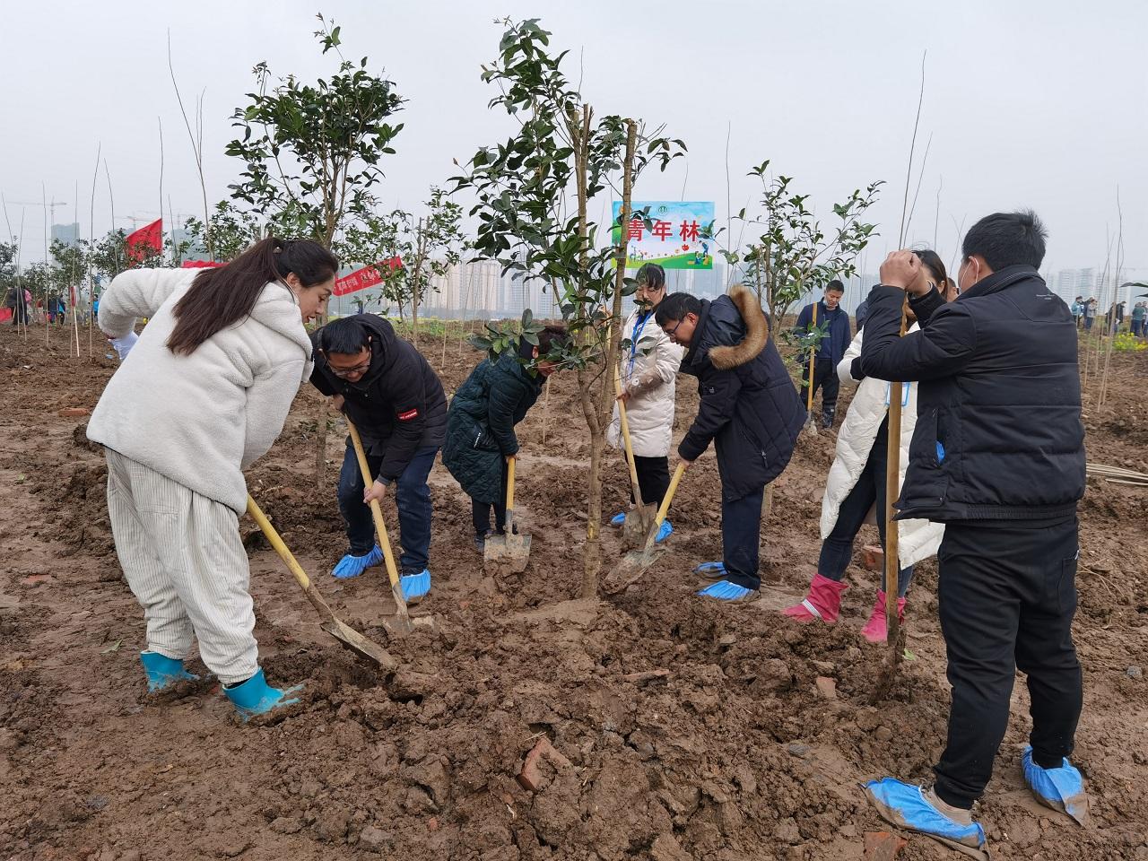 安徽迈德普斯党支部组织开展义务植树活动